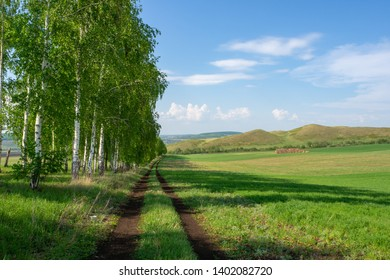 Beautiful countryside landscape. Birchwood, hills and a dirt road running along the field.