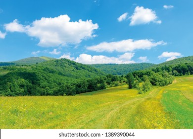 beautiful countryside landscape. wild flowers on rural field near the forest on a tranquil summer day. mountain ridge under cloudy blue sky