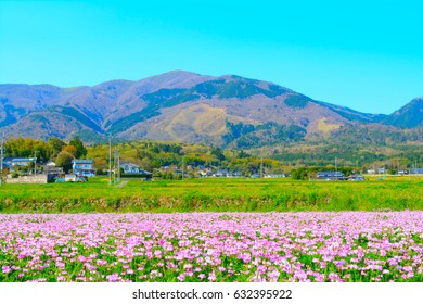 Beautiful countryside landscape,Okayama,Japan. You can see the scenery where astragalus bloom in the northern part of Okayama.