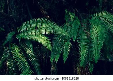 KailaRae's Photographer Portfolio | Shutterstock