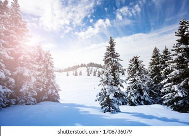 Beautiful covered with snow fir forest on mountain plane after strong snowfall on sunny day