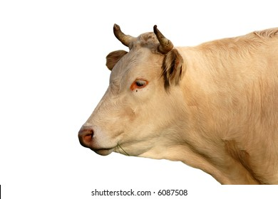 Beautiful cow isolated on white