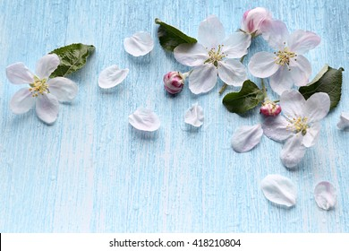 Beautiful crab apple tree blossoms against a blue background.