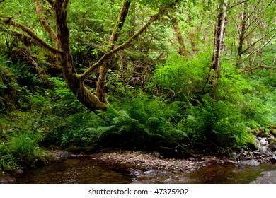 Beautiful creek in Oregon wilderness