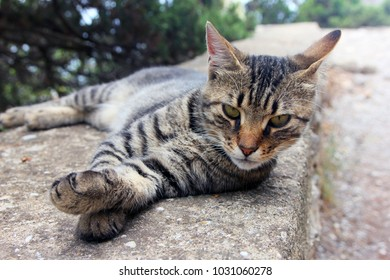 beautiful crimean non-pedigree tabby eared cat lying on stone parapet and pricked his ears closeup