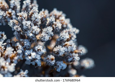 Beautiful crystals of rime ice on plants during frosts. Macro shot of hoarfrost on inflorescences. Natural background with hoarfrost on the grass. Cold weather. Winter nature. Close-up.
