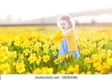 Beautiful curly toddler girl in a blue dress playing in a field of yellow daffodil flowers on a sunny summer evening