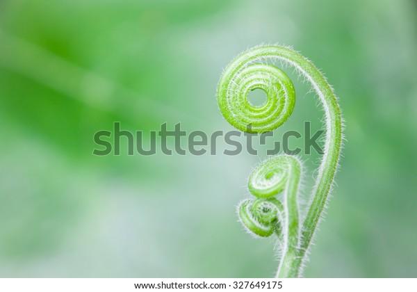Schönes, lockiges Muster auf grünem Hintergrund