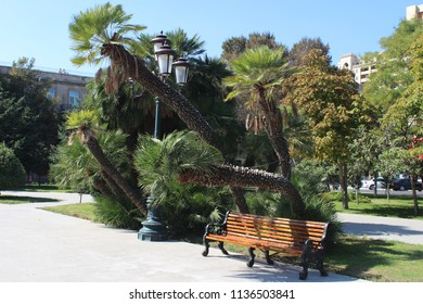 Beautiful curved palms and a bench in Sahil Bagi park in Baku, Azerbaijan