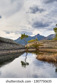 Beautiful curved Pine on the Lake in mountains of Karkaraly national park in Central Kazakhstan