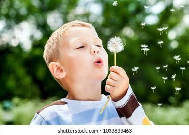 Beautiful cute boy in park blowing on dandelion in summer time