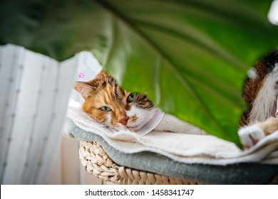Beautiful cute cat pet wearing cone of shame elizabethan after surgery - view through large plant leaf