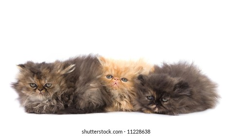 beautiful and cute cats close up on white background