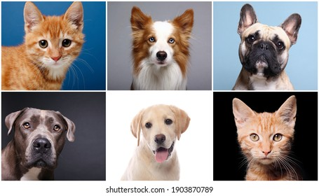 Beautiful cute cats and dogs