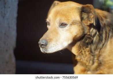 beautiful cute home dog