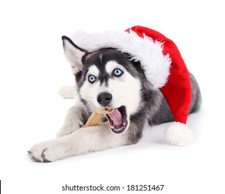 Beautiful cute husky puppy with Santa hat, isolated on white