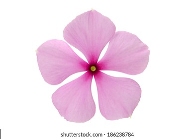 beautiful and cute pink flower isolated on the white background