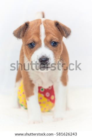 Beautiful Cute Puppy Dogs Not Barking Stock Photo Edit Now