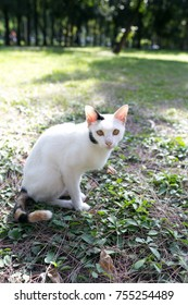 Beautiful, cute white cat on the grace
