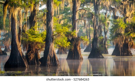 The beautiful cypresses in Caddo Lake on a calm summer morning