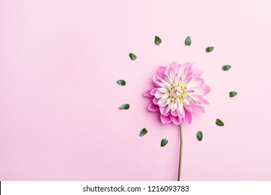 beautiful dahlia flower and green leaves arranged in circle, minimal concept, flat lay.