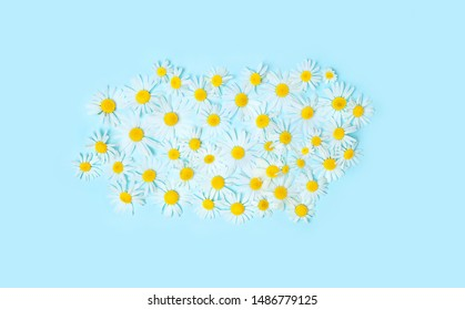 Beautiful daisy flowers composition. spring and summer white chamomile flowers on gentle light blue background. minimalism concept. Flat lay, Top view. copy space