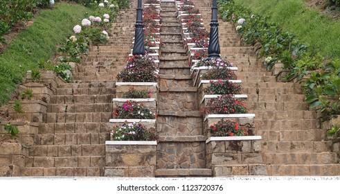 Beautiful Dalat Flower Park