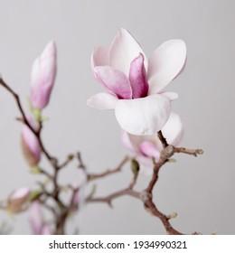 The beautiful Danish pink flowers