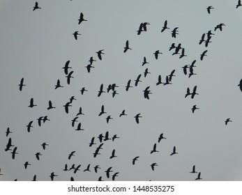 Beautiful dark flying on sky