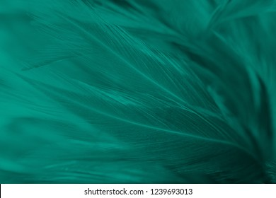 Beautiful dark green florida keys colors tone feather texture background,trends color