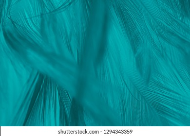Beautiful dark green turquoise vintage color trends feather pattern texture background