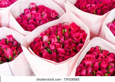Beautiful dark pink roses in sweet pink paper bundle in the farm after harvested, ready to be delivered to the market