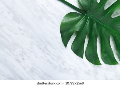 Beautiful dark tropical Monstera leaf on marble background. Popular plant in interior design.