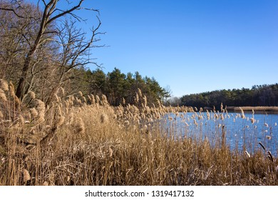 A beautiful day in early spring at a small lake, in a wetland of the Nuthe-Nieplitz region in Brandenburg, Germany.