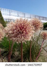 beautiful day, beautiful flowers in the Loki Schmidt Garten (Hamburg, Germany)