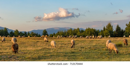 A beautiful day and the sheep grazing in a green field with trees, mountains, and clouds in the sky