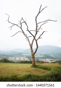 Beautiful dead tree in a green pasture