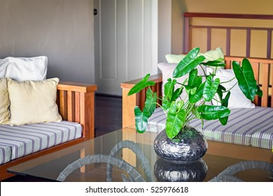 Beautiful decor in living room with philodendron in silver vase on transparent glass table