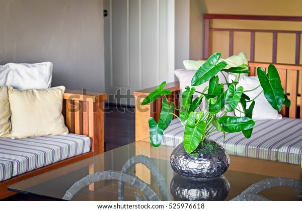 Beautiful Decor Living Room Philodendron Silver Stockfoto ...