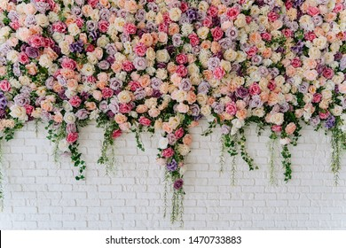 Beautiful Decorative Colorful Roses on Brick Wall. Wedding Party Decor Detail. Delicate Clambering Plant Blossom Pastel Flower on White Background. Elegant Arrangement Floristics Setting