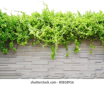 The beautiful decorative plant on the modern wall isolated on white background