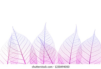 Beautiful decorative skeleton leaves and space for text on white background
