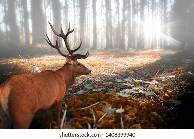 A beautiful deer in the forest
