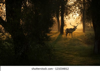 Beautiful deer in the forest with amazing lights at morning in October. View my gallery fore more beautiful nature photos.