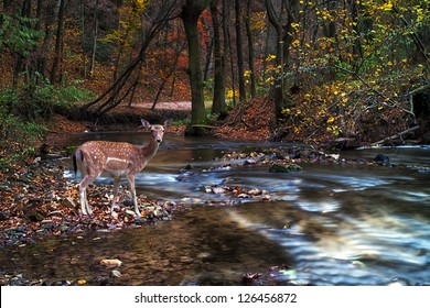 Beautiful deer in the forest with river