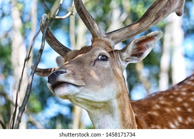 beautiful deer looks through the branches