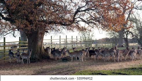 Beautiful deer in park.