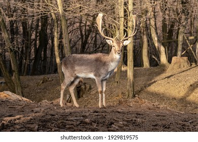 beautiful deer standing in a wild forest