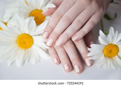 Beautiful delicate hands with manicure and flowers, closeup isolated on white. Photo of a female hand at spa salon on manicure.Beautiful fingers.contacts of hands. Petals of camomile flowers