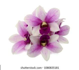 beautiful dendrobium orchid flowers isolated on white background
